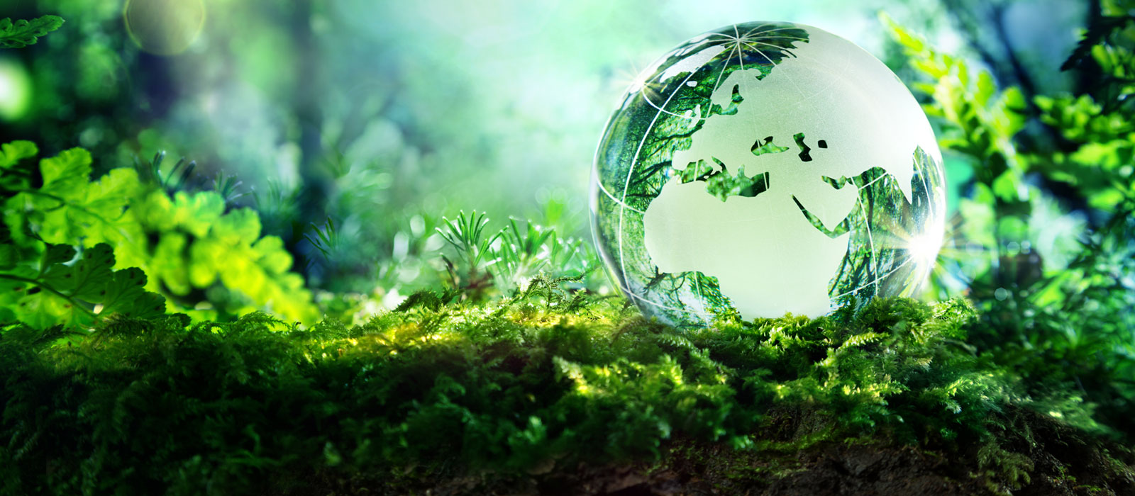 Environmental Science colloge courses