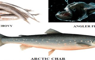 EDIBLE FISHES AND THEIR NUTRITIONAL VALUES