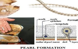 Pearl Formation