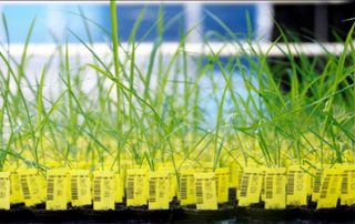 Use of Genetic Engineering for Crop Modification