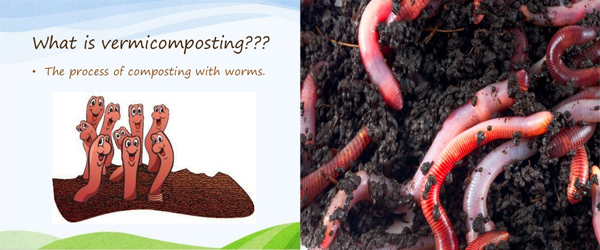 VERMICOMPOST - MAKING GARBAGE INTO GOLD