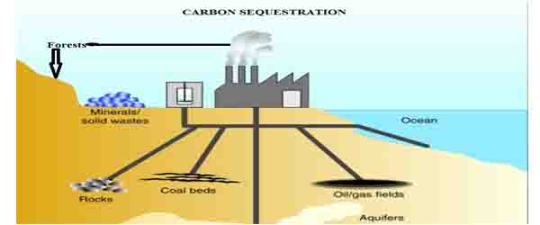 Carbon Sequestration Through Ecosystems