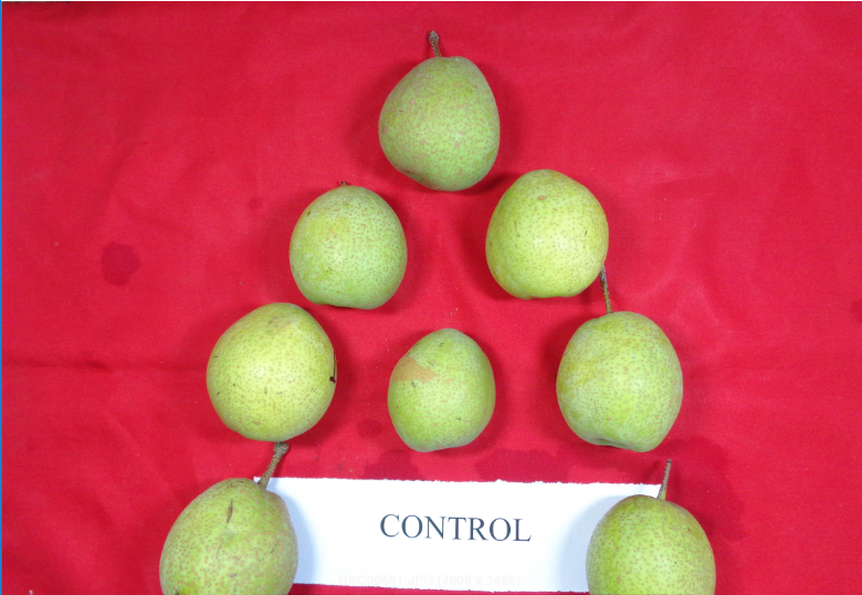 Effect of pre-harvest foliar spray of calcium and potassium on fruit quality of Pear cv. Pathernakhs