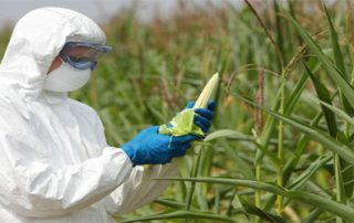 Genetically Modified (GM) Crops