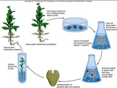 METHODS OF MICROPROPAGATION ADVANTAGES