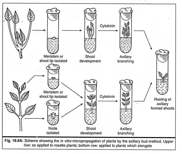 METHODS OF MICROPROPAGATION