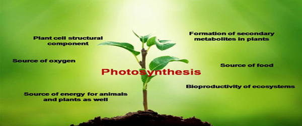 Photosynthesis The vital Process UCBMSH