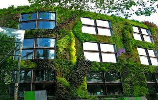 Vertical Gardens growing more in less space
