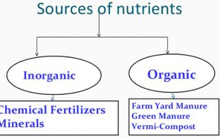 Availability of Micro-Nutrients in Organic and Inorganic Fertilizers(IN PPM)