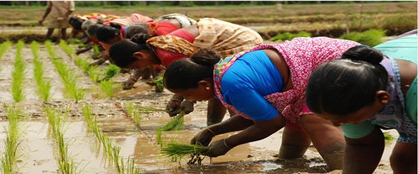 BASMATI RICE - FOR PROCPARIOUS LIFE OF FARMERS