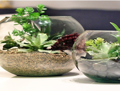 TERRARIUMS: GIVING PLEASURE EFFECTS TO EYES