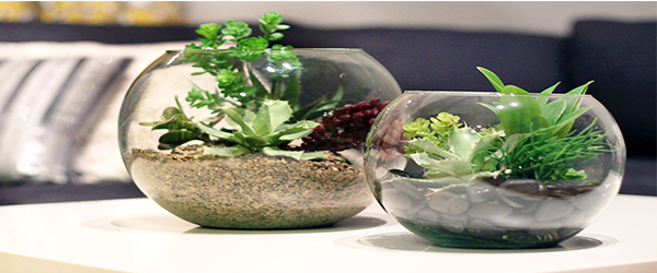 TERRARIUM- GIVING PLEASURE EFFECTS TO EYES