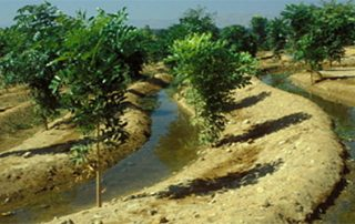 Ecosystem Services of Agroforestry