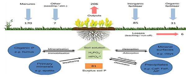 Phosphorus Solubilising Bacteria (PSB)