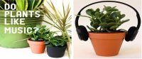 MUSIC AND PLANTS- Do Plants like Music