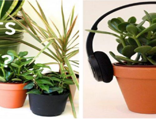 MUSIC AND PLANTS: Do Plants like Music?