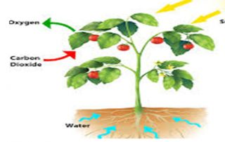 Mechanism of Oxidative Stress Tolerance in Plants