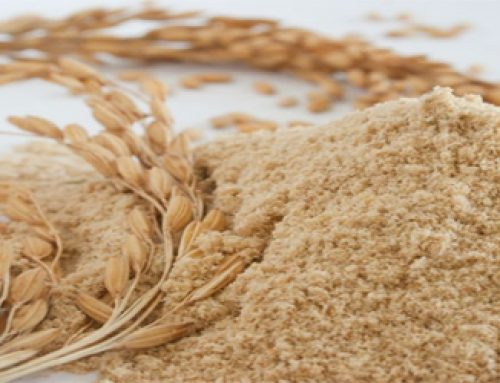 The part of rice we don't eat may be highly nutritious
