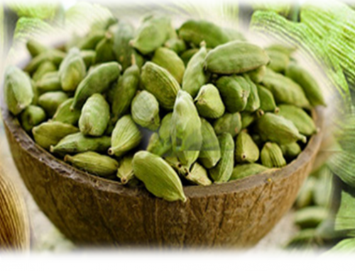 Importance Of small cardamom