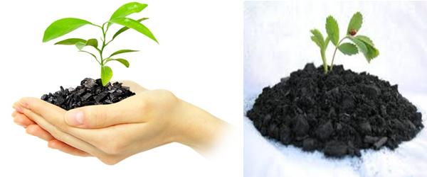 Biochar and Soil