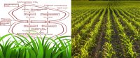 Ecological Significance of C4 in Plants