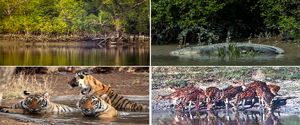 Faunal diversity of Sunderban Delta