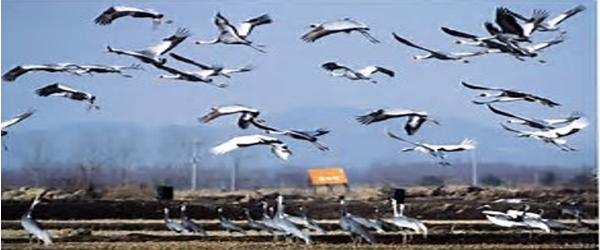 Migration in Birds