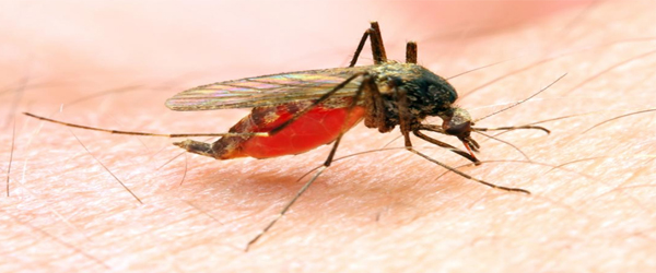 Mosquito spreading Zika virus