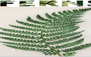Ornamental Ferns