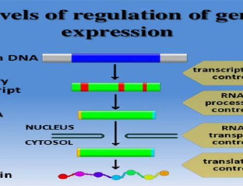 Regulation of gene expression in developmental process