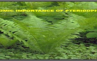 Economic Importance of Pteridophytes
