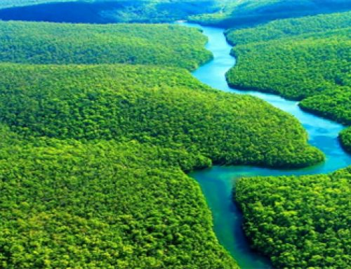 Facts about the Amazon Rainforest