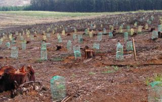 Forestry scopes- South African Case Study