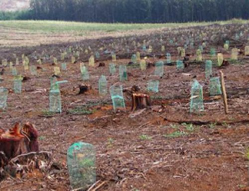 Forestry scopes: South African Case Study