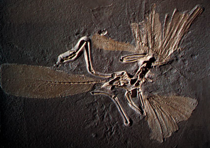 Connecting Link – Archaeopteryx