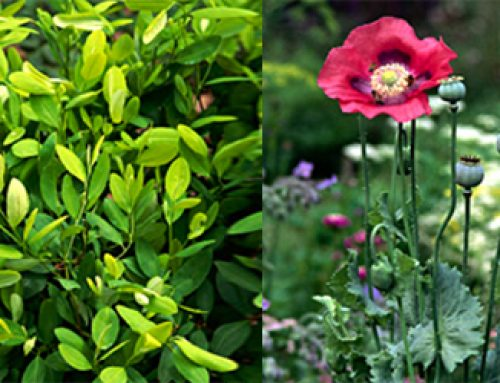From Plants To Medicines