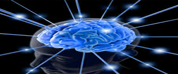 How much of the body's energy does the brain used compared to other organs and why?