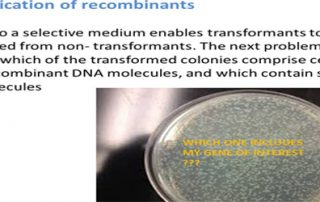 Identification of recombinants