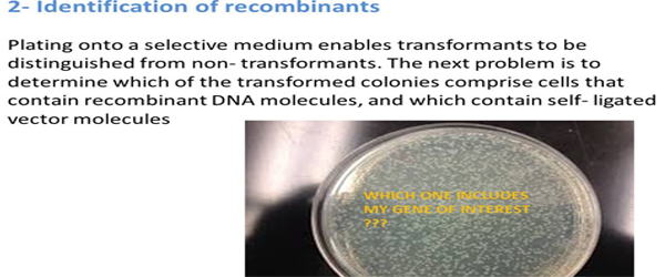 Identification of recombinants