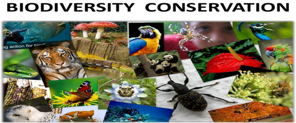 Why should we Conserve Biodiversity?