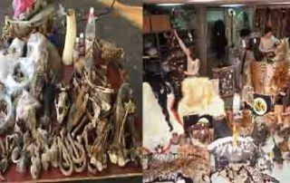 Illegal Wild Life Trade In India