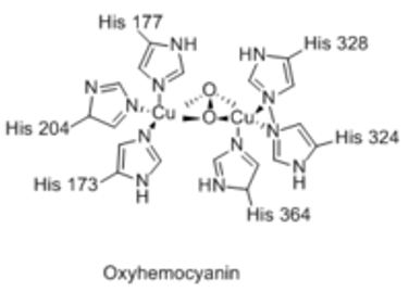 Structure and Significance of Hemocyanin