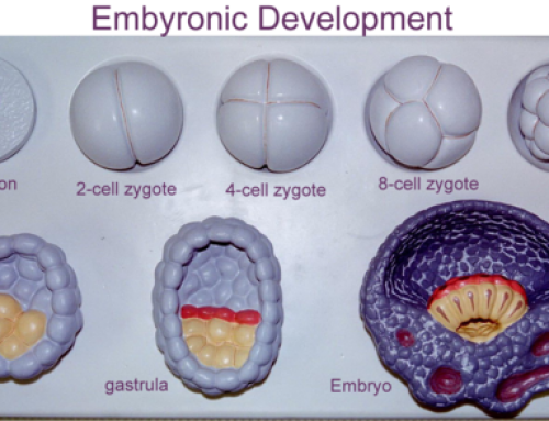 ORGANOGENESIS-EYE EMBRYOLOGY